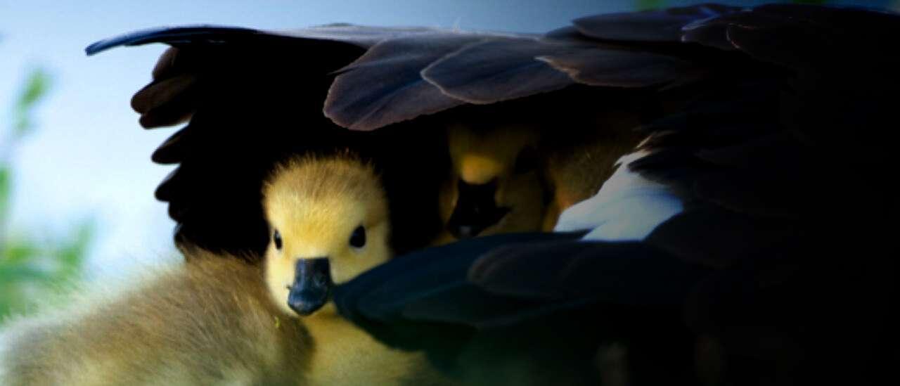 blog madres-animales-17-escenas-tiernas-1280x720.jpg